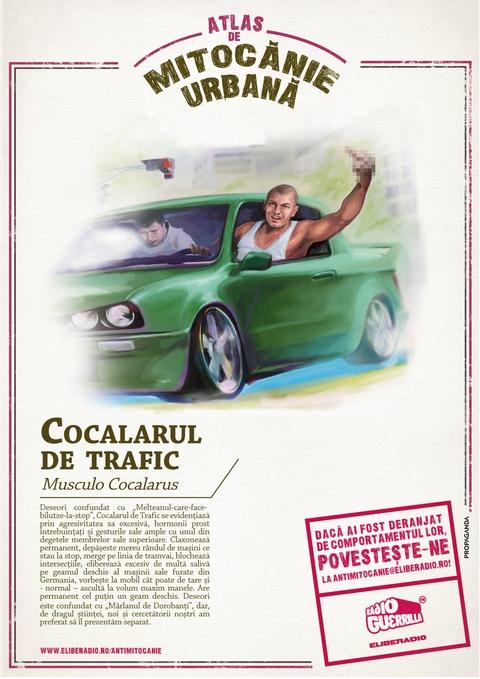 Cocalarul trafic-A4