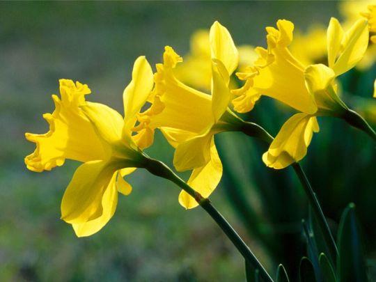 flori-martie-789651
